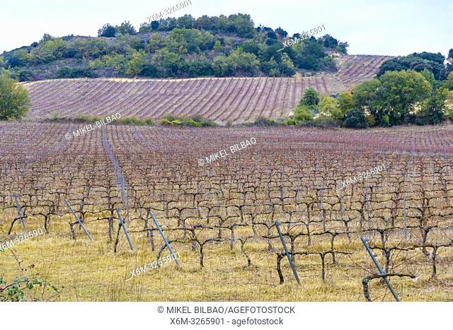 Vineyard in winter. Iguzquiza, Navarre, Spain, Europe