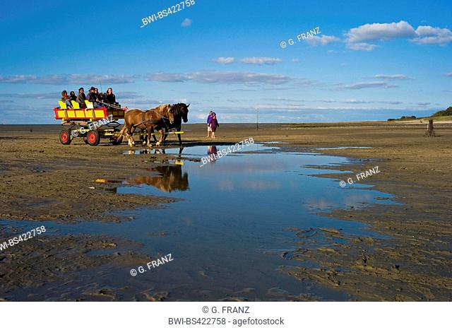 horse wagon carriage returns from the island Neuwerk, Germany, Hamburgisches Wattenmeer National Park