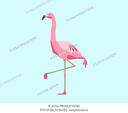 pink flamingo bird over blue background