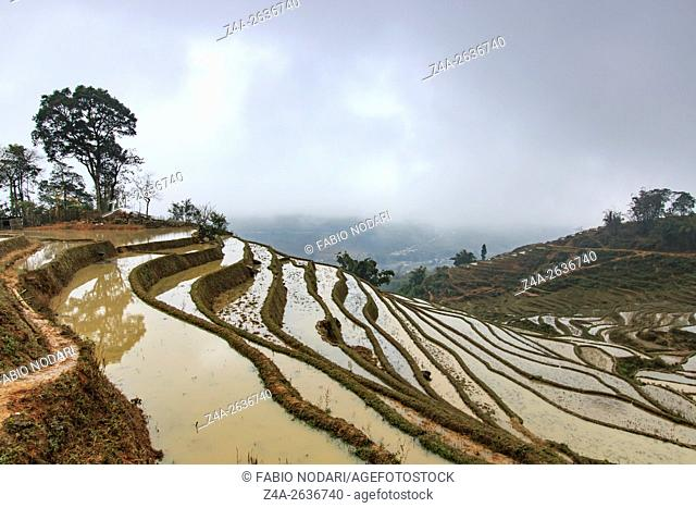 Rice terraces of Sapa, Vietnam