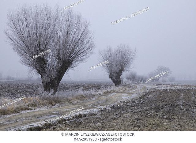 Road in Winter, North Poland