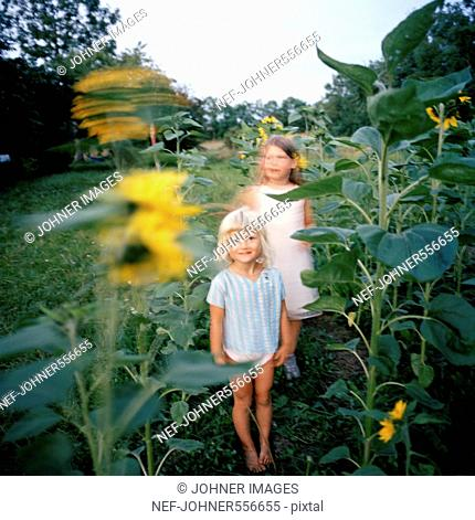 Children standing between sunflowers, Oland, Sweden