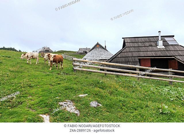 Velika Planina and mountain cottage hut or house