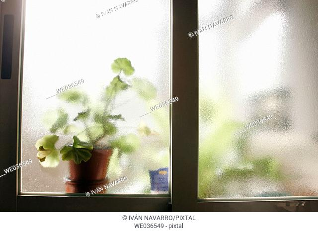 Plant seen through translucent glass