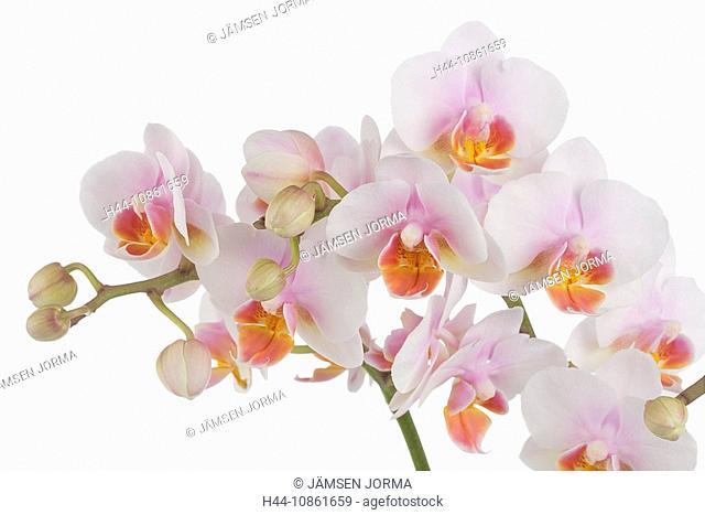 Arrangement, Blooms, Blossoms, Bouquet, Color, Col