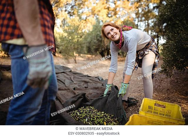 Man standing while woman working at olive farm