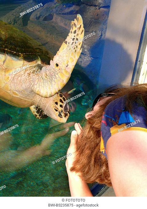 loggerhead sea turtle, loggerhead Caretta caretta, woman face to face with a curious animal at the pane of an outdoor aquarium, Spain