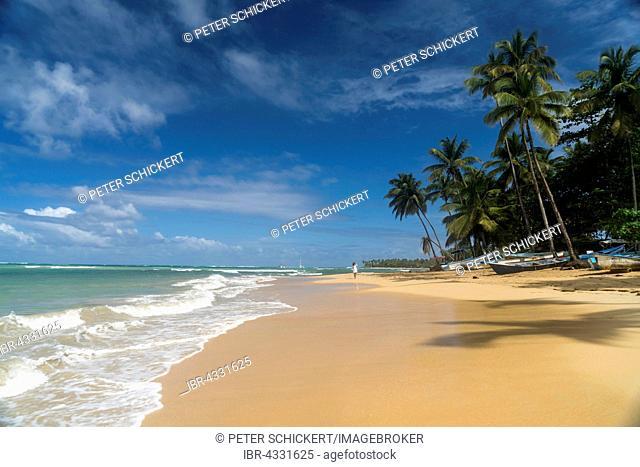 Sandy beach with palm trees in Las Terrenas, Samana Peninsula, Caribbean, Dominican Republic