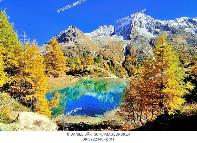 Lac Bleu with autumnal larch trees in Val d'Arolla, Mt Dents de Veisivi at the back, Canton of Valais, Switzerland