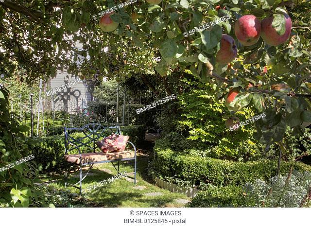 Bench under apple tree in lush garden
