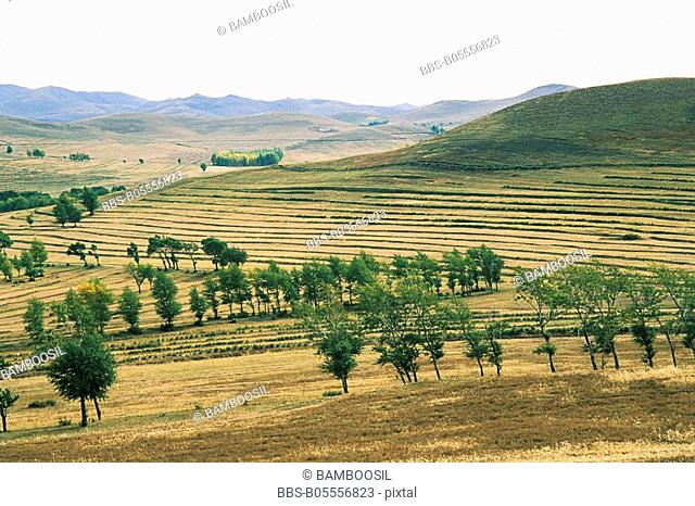 Farmland with wind-break forests, Guyuan County, Hebei Province of People's Republic of China