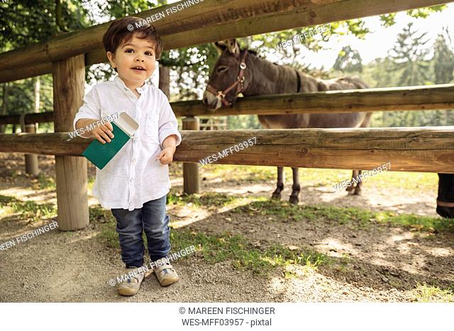 Smiling toddler holding up animal food for donkey in wild park