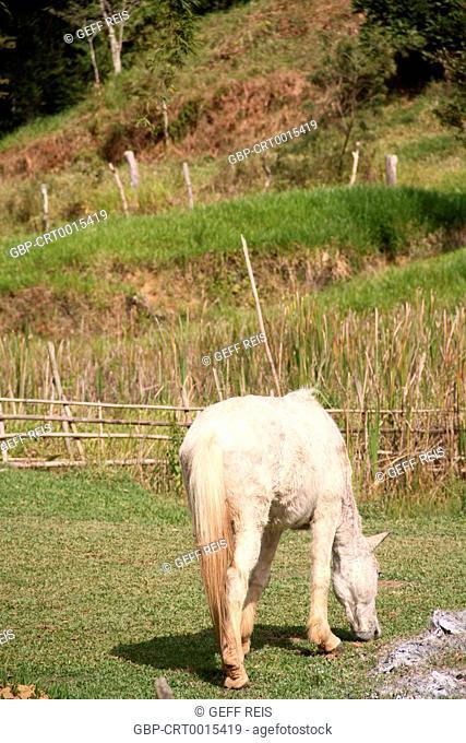 Minas Gerais; MG; Brazil; animal; foal; horse grazing; farm; rural área