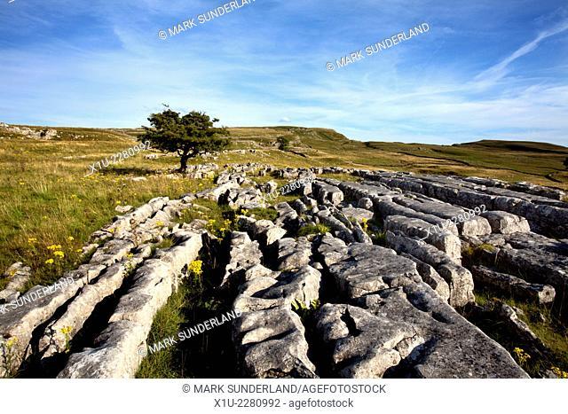 Lone Tree and Limestone Pavement at Winskill Stones