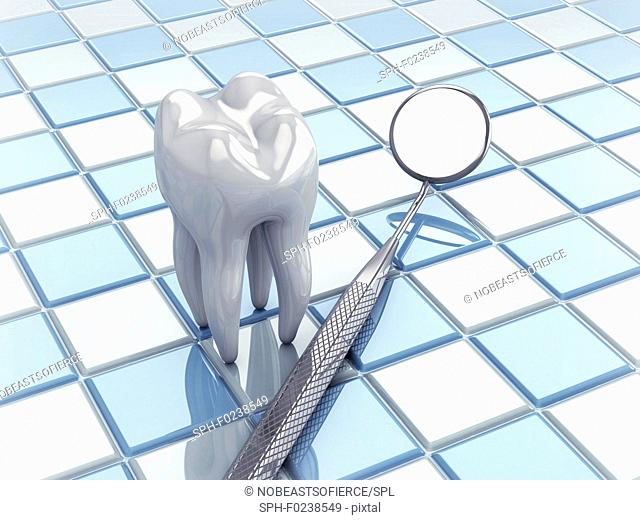 Angled mirror and tooth model, illustration
