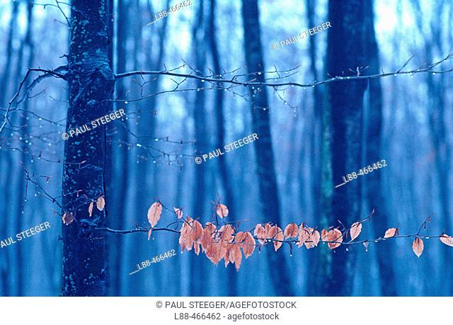 Forest in winter