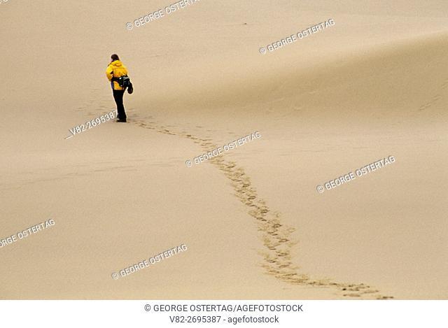 Umpqua Dunes, Umpqua Dunes Scenic Area, Oregon Dunes National Recreation Area, Oregon