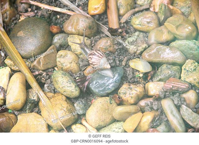 snail; slug; bug; Brazil