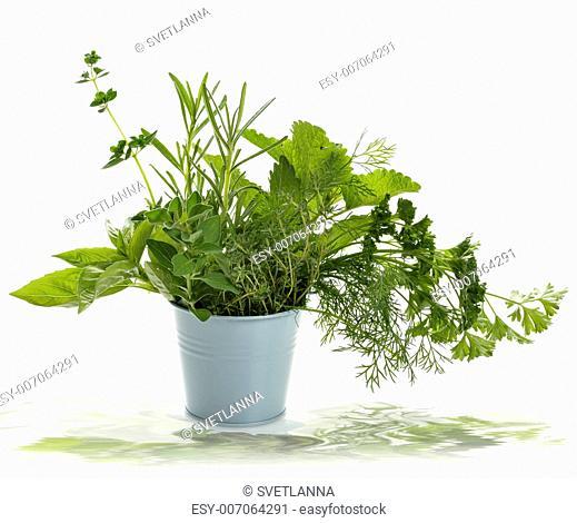 Fresh Herbs In A Pot