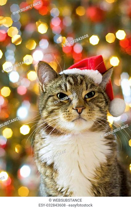 Cat with Santa Claus red hat with multicolored lights in the background