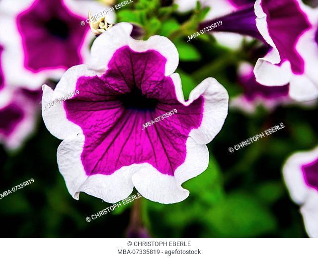 View on purple flowers