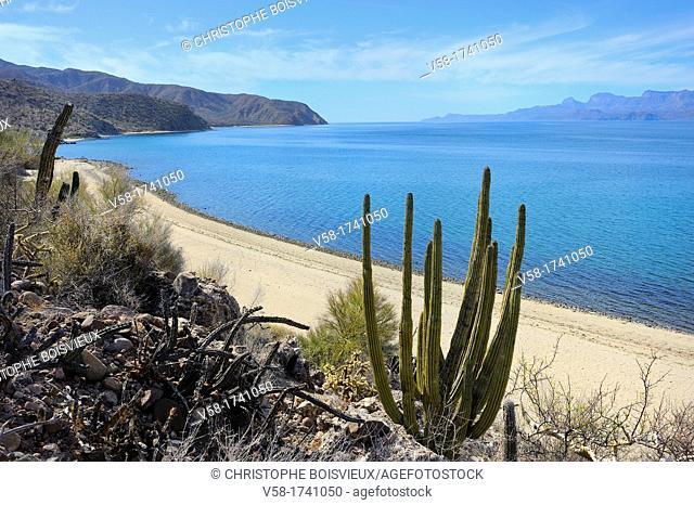 Mexico, Baja California, Isla San Jose