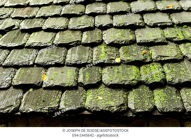 Close up a the late shingles on a roof partially covered with moss and algae. Pittsburgh Pennsylvania USA