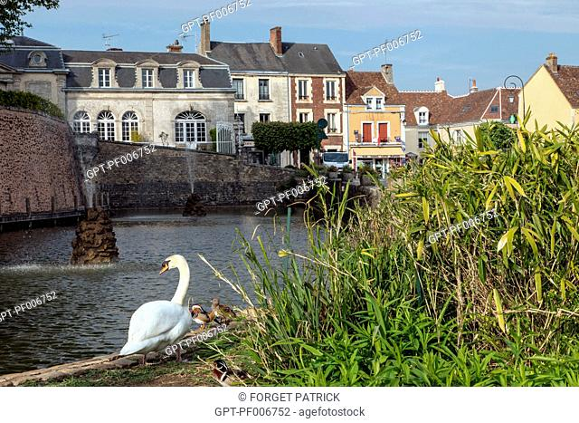 SWANS IN FRONT OF THE POND, BOULEVARD BANSARD DES BOIS, BELLEME (61), TOWN IN THE REGIONAL PARK OF THE PERCHE, VILLAGE OF CHARACTER, NORMANDY, FRANCE