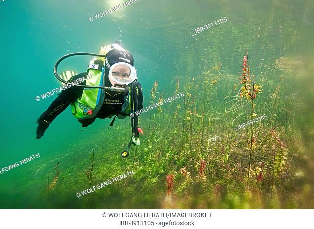 Scuba diver near the banks of a clear lake, Bavaria, Germany