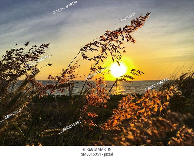 plants growing on beach against sky during sunset