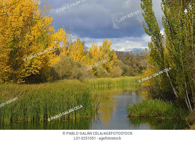 Riparian vegetation in Parque Regional río Manzanares. In the background the Guadarrama mountains. El Pardo, Madrid province, Spain