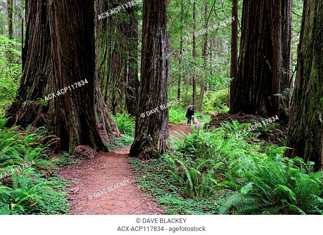 A woman and her Golden Retriever walk a trail in Redwood Forest in Redwood State Park in California, USA