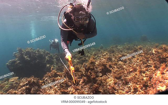 Divers measuring reef, Reef check, Palawan, Philippines