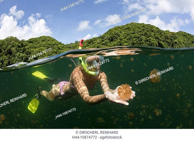 Schwimmen zwischen Quallen, Mastigias papua etpisonii, Quallensee, Mikronesien, Palau, Swimming with Jellyfishes, Mastigias papua etpisonii, Jellyfish Lake