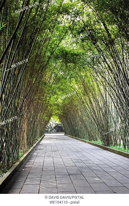 Peaceful bamboo covered walkway through the Wangjianglou Park in Chengdu, Sichuan province, China