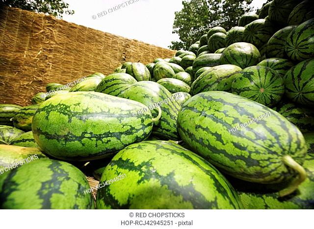 Low angle view of a heap of watermelons, Zhigou, Shandong Province, China
