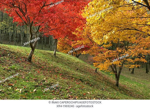 Autumn in the recreational area of Lukun, Natural Park Pagoeta, Aia, Gipuzkoa, Guipuzcoa, Basque Country, Spain