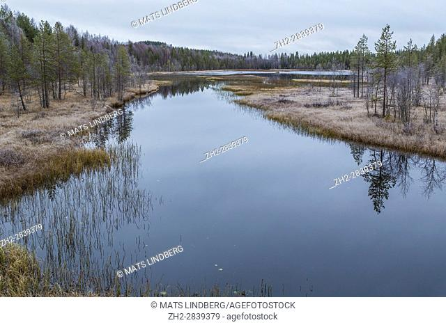 River in frosty landscape with forest reflecting in the water, frost on trees and in grass, Norrbotten, Sweden