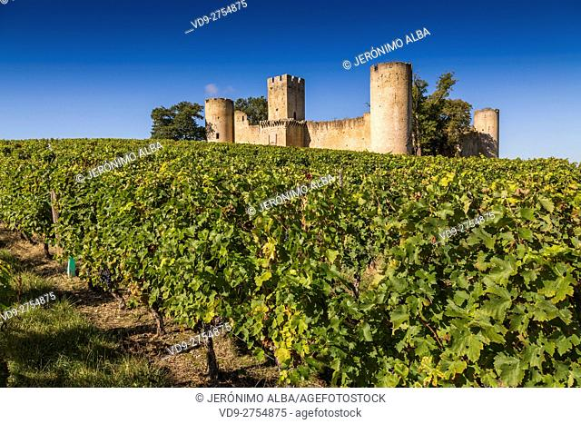 Vineyard and ancient castle. Sauternes Region, Budos, Aquitaine-Limousin-Poitou-Charentes. Bordeaux, Aquitaine France Europe