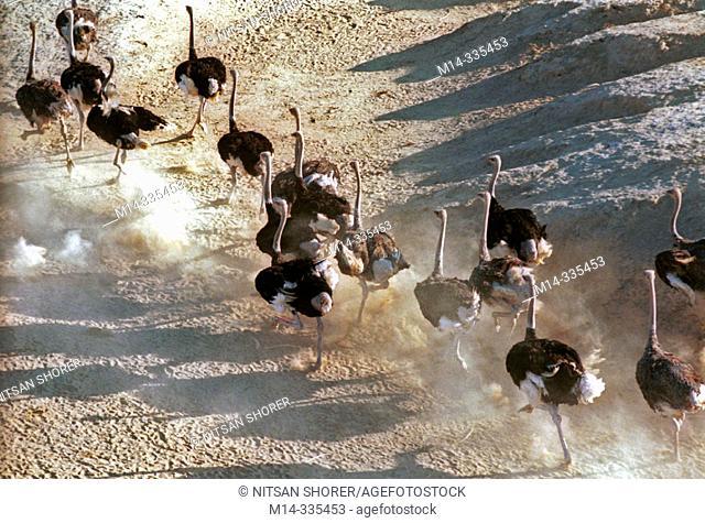 Aerial view of ostrichs farm in the Neguev Desert. Israel