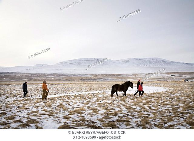 Four people with one horse, Skagafjordur Iceland