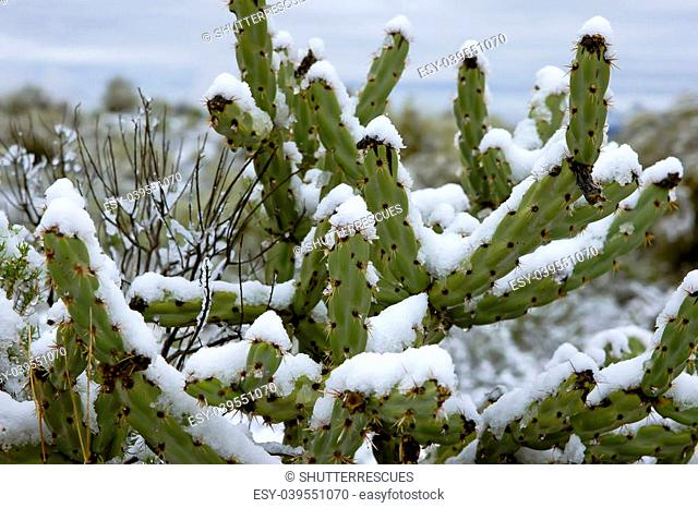 Photo from the epic snowstorm in Phoenix, Arizona February 2013