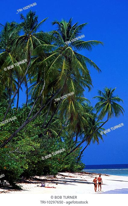Tobago Pigeon Point Palm Trees And Beach