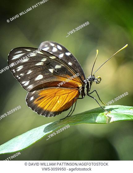 Monarch Butterfles, Calgary Zoo, Alberta, Canada