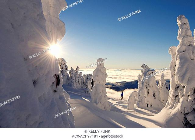 A skier among snow ghosts creates a beautiful environment at sunrise at the top of Sun Peaks Resort, Thompson Okangan region, British Columbia, Canada