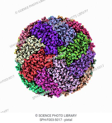 Iron storage molecule. Molecular model of ferritin, a protein that acts as an iron store and is mainly found in the liver, kidneys and spleen