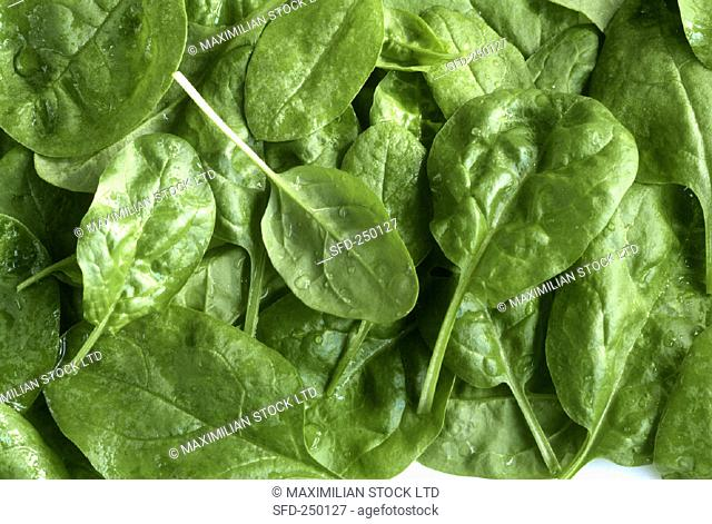Freshly washed spinach (close-up)