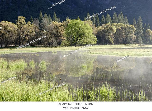 Flood water in Cook's Meadow in spring Yosemite National Park, California, USA