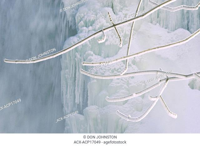 Frosted branches of ash tree Fraxinus near ice formations of Bridal Veil Falls, Kagawong, Manitoulin Island, Ontario, Canada