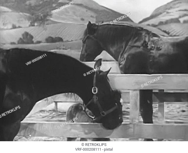 Two horses and foal in horse corral